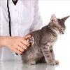 Ветеринарные клиники в Тисуле